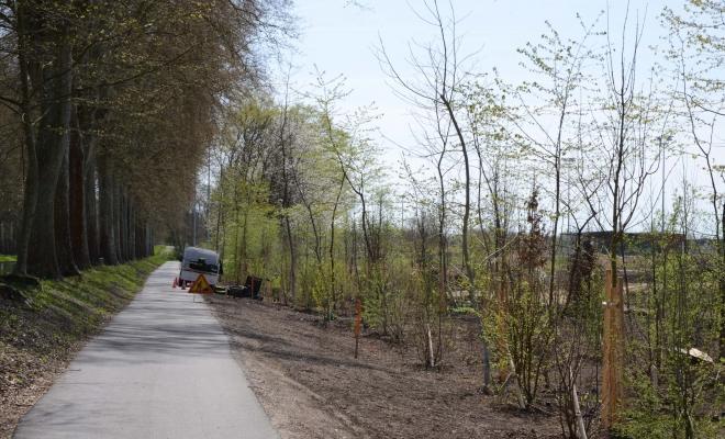 Plantation de végétaux, Illkirch-Graffenstaden