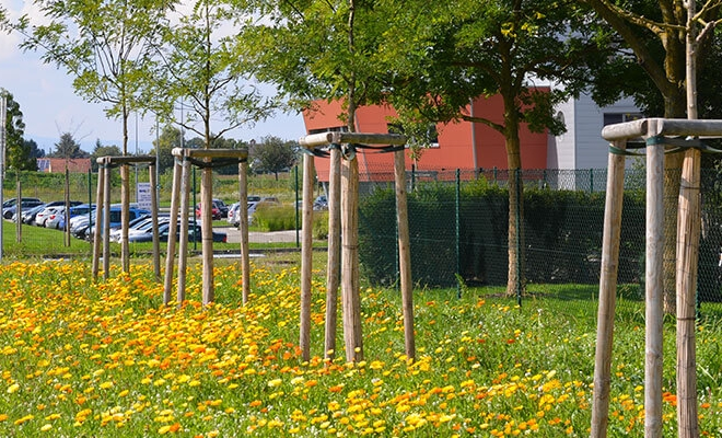 Engazonnement de Prairies Fleuries, Marckolsheim