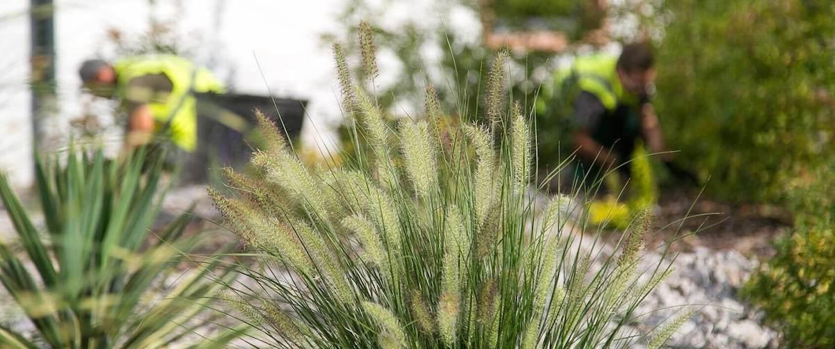Ginkgo espaces verts am nagement et entretien du paysage - Entretien des jardins et espaces verts ...